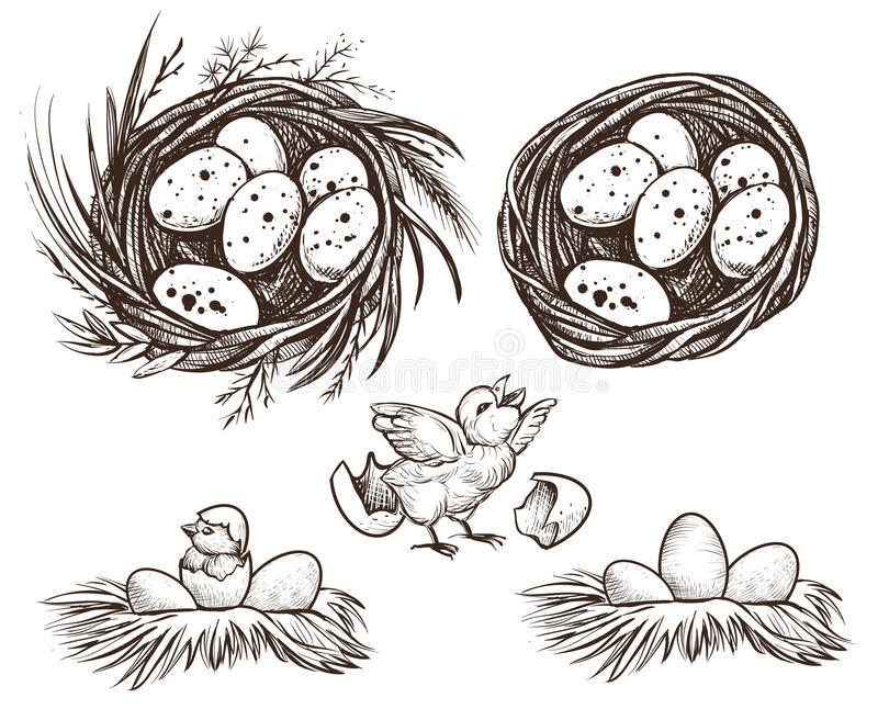 Nest set and hatching chicken. Vector drawing. Nest set and hatching chicken. Vector hand drawn line illustration of eggs in nest and nestling stock illustration