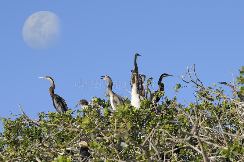 A nest in the sky. This picture it was taken on Okavango Delta, Botswana stock photo