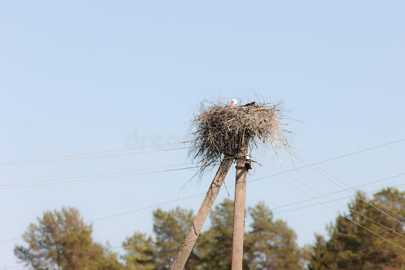 Nest with a stork stock images