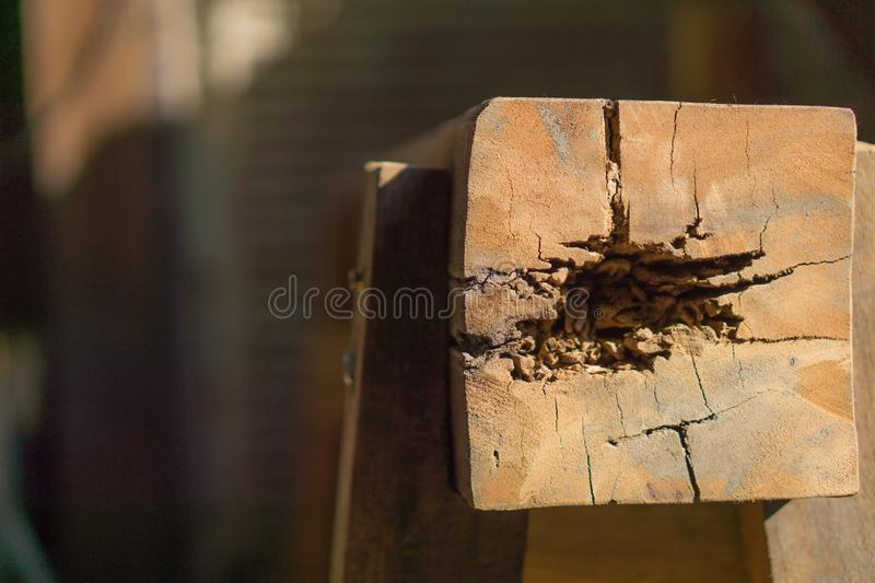 Nest termite on decay wood poles. Copy space for text royalty free stock photography