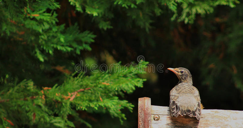 Nest to Bench royalty free stock photography