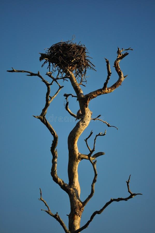 Nest in tree royalty free stock photos