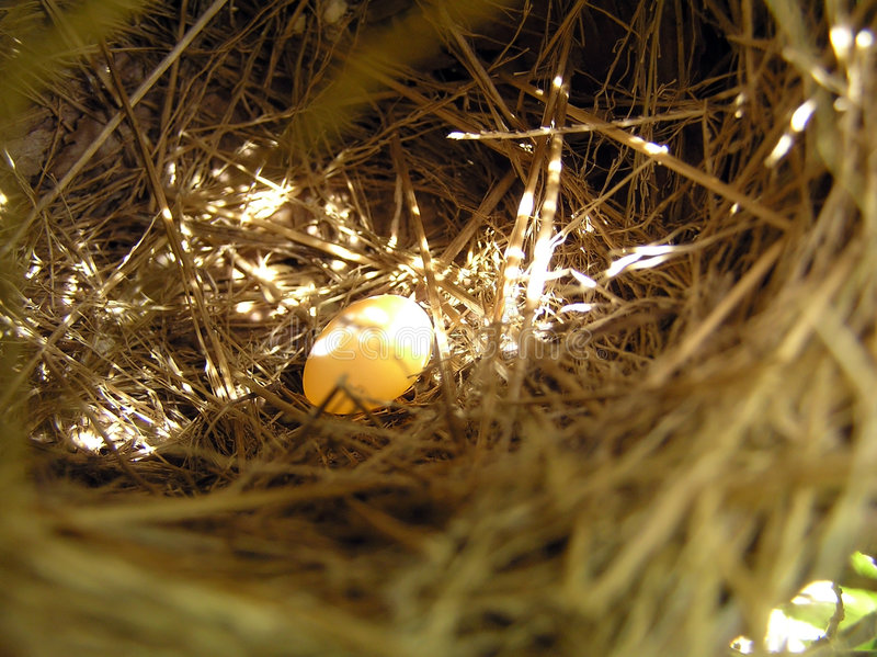 Nest und Ei stockbild