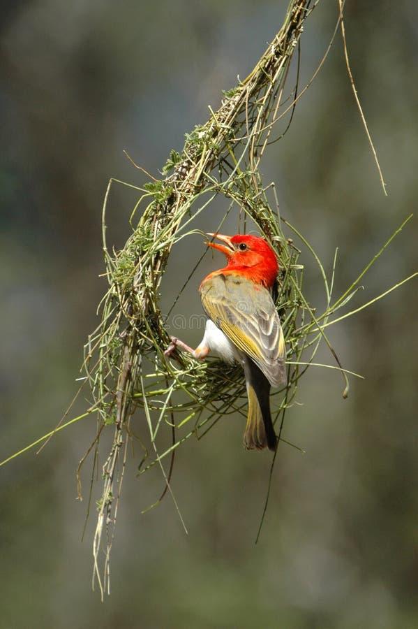 Nestgebäude stockbilder