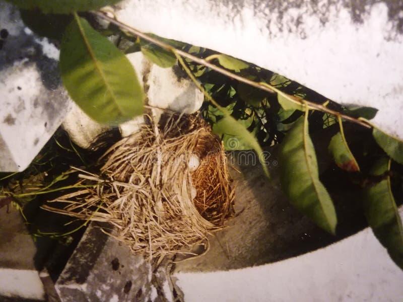 nesting arkivfoton