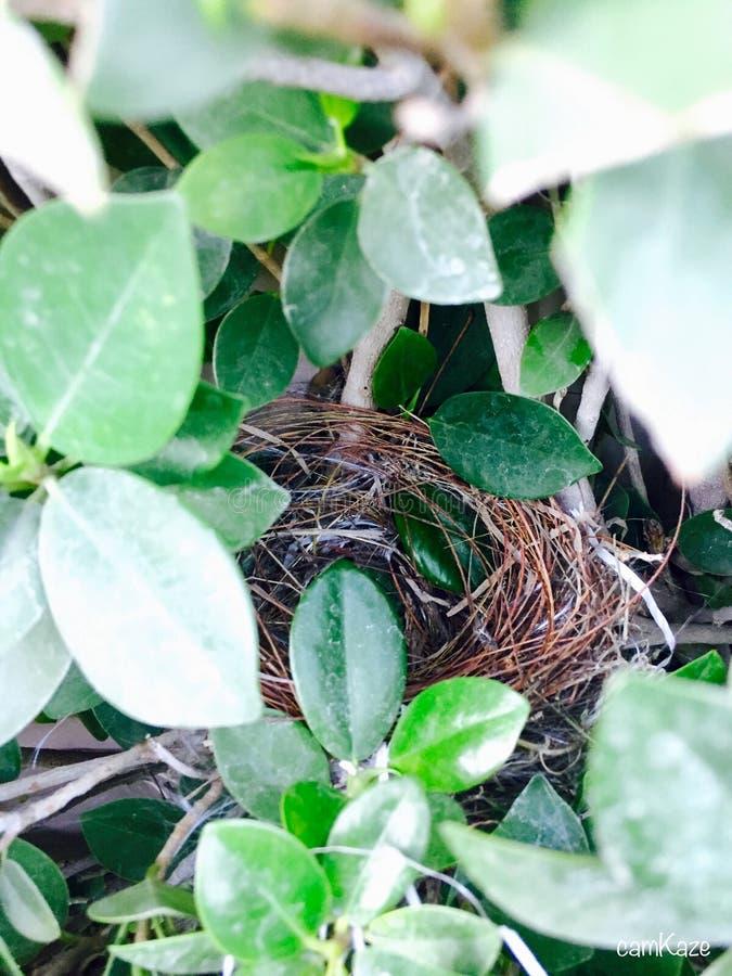 nesting foto de archivo libre de regalías