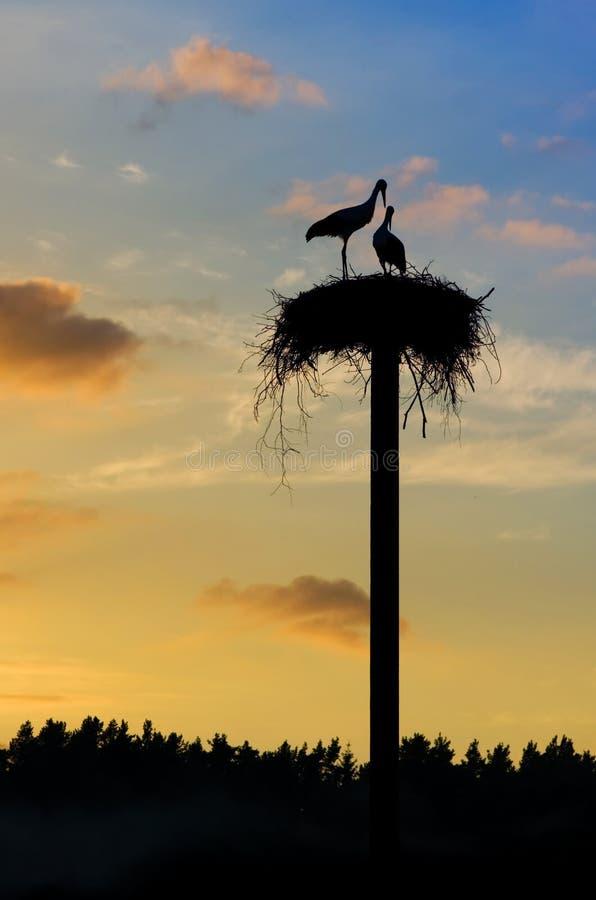 Free Nesting Birds Stock Photos - 28823963