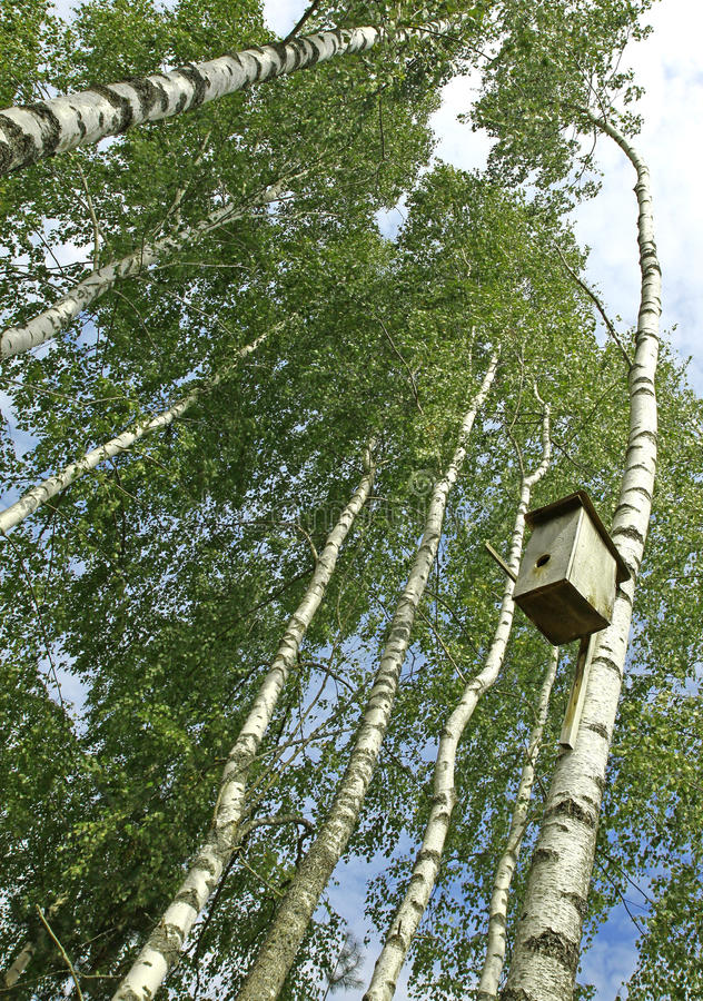 Nesting box. Wooden nesting box hanging on the birch tree royalty free stock photography
