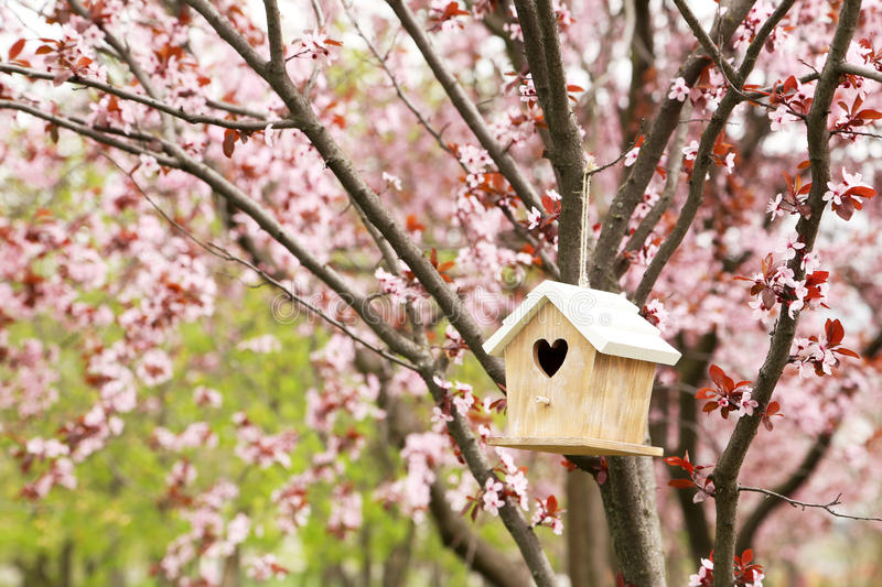 Nesting box. Hanging on the tree stock photo