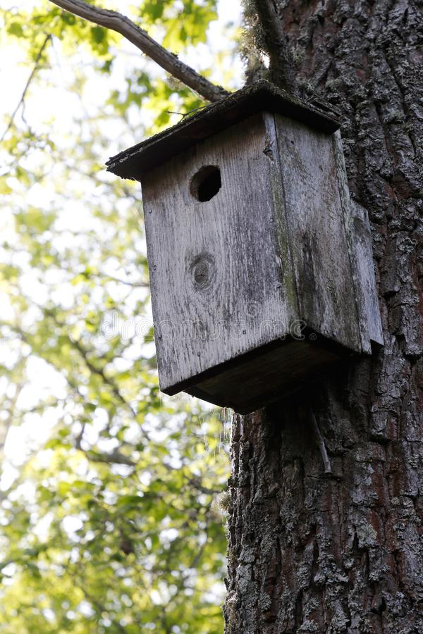 Nesting box. Low angle view of a wooden nesting box royalty free stock images
