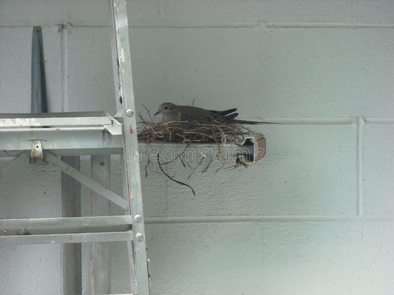 Nesting Dove royalty free stock photography