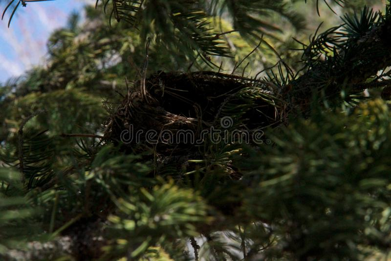 Nesting in the trees royalty free stock photo