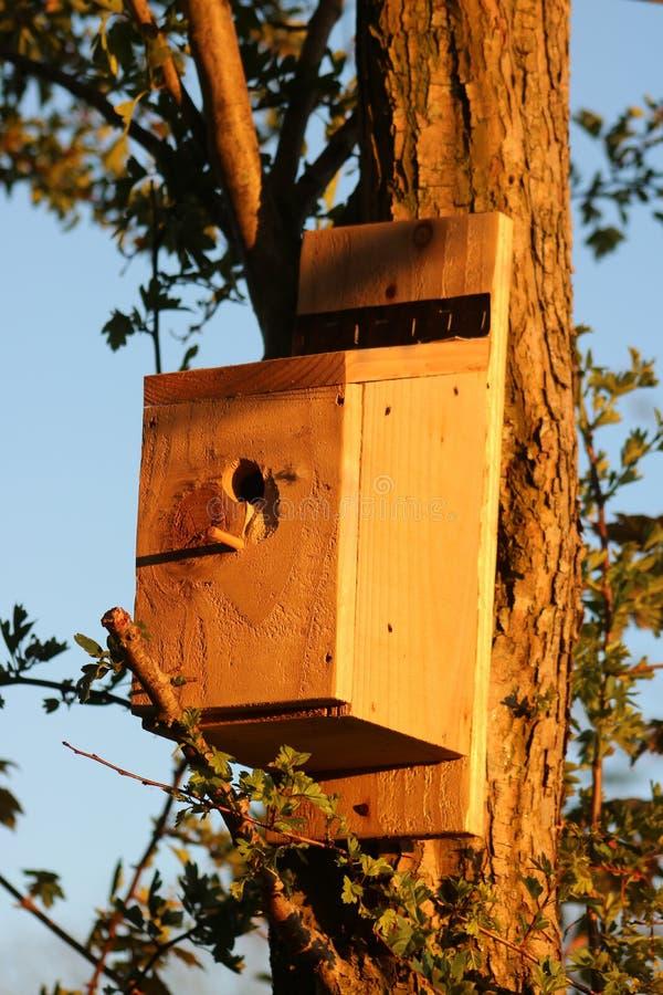 Nestkiste auf dem Hahnbaum bei Sonnenlicht am Abend stockbild