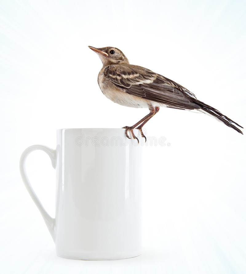 Free Nestling Of Bird (wagtail) On Cup Stock Photos - 15198443