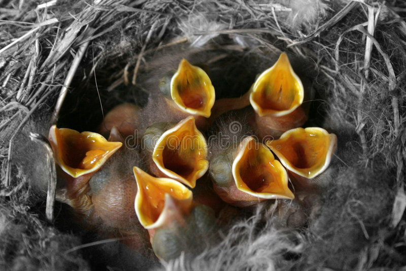 Nestlings in jack royalty free stock image