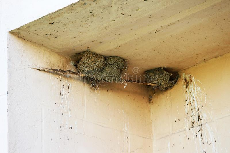 Nests of swallows in the deepening of a multi-storey building in the city.  royalty free stock image