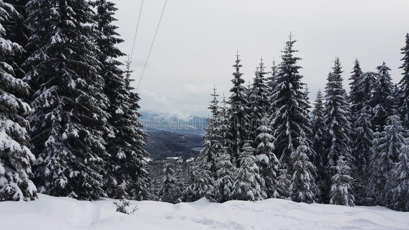 Net bos in de winter royalty-vrije stock fotografie
