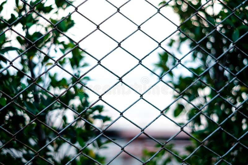 Net and garden background blur. green backdrop. stock images