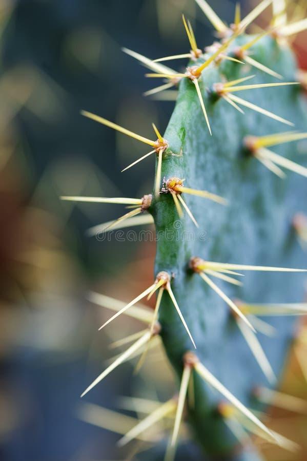 Netelige Groenachtige Cactus die de Wildernis bevinden zich stock afbeelding