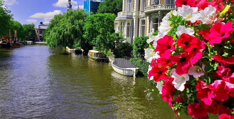 Netherlands Amsterdam Canal. Pink and white flowers stock photography