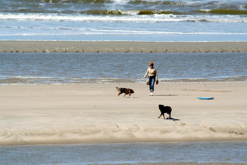 Woman lets dogs out on the beach stock photos