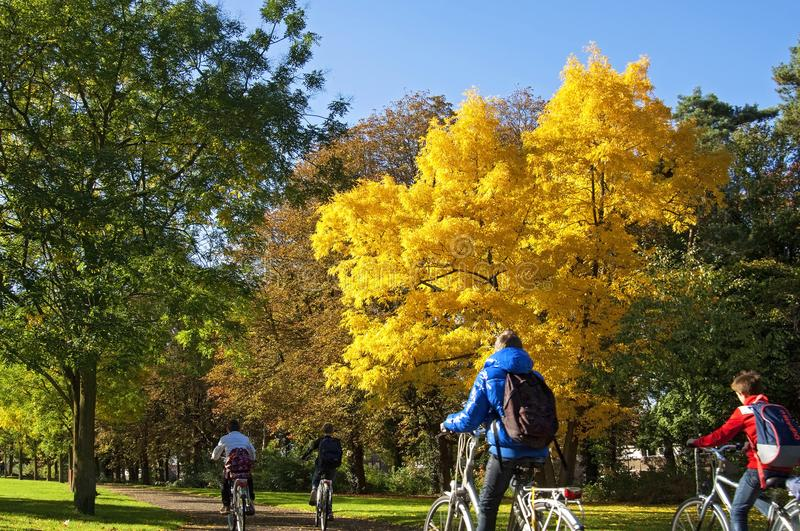 Dutch school children cycling in colorful landscape stock image