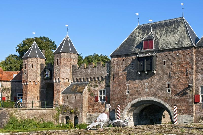 Pigeons in front of city gate Koppelpoort Amersfoort stock images