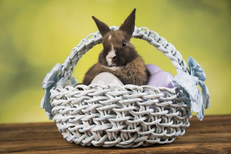 Nett wenig Kaninchen mit Korbhintergrund lizenzfreie stockbilder