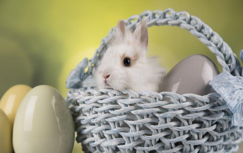 Nett wenig Kaninchen mit Korbhintergrund stockfoto