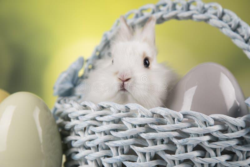 Nett wenig Kaninchen mit Korbhintergrund stockbild