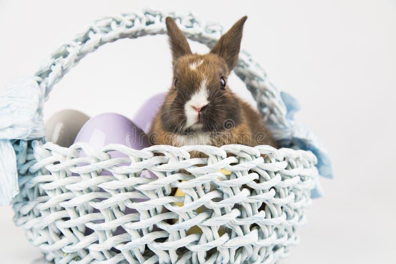 Nett wenig Kaninchen mit Korbhintergrund lizenzfreie stockfotografie
