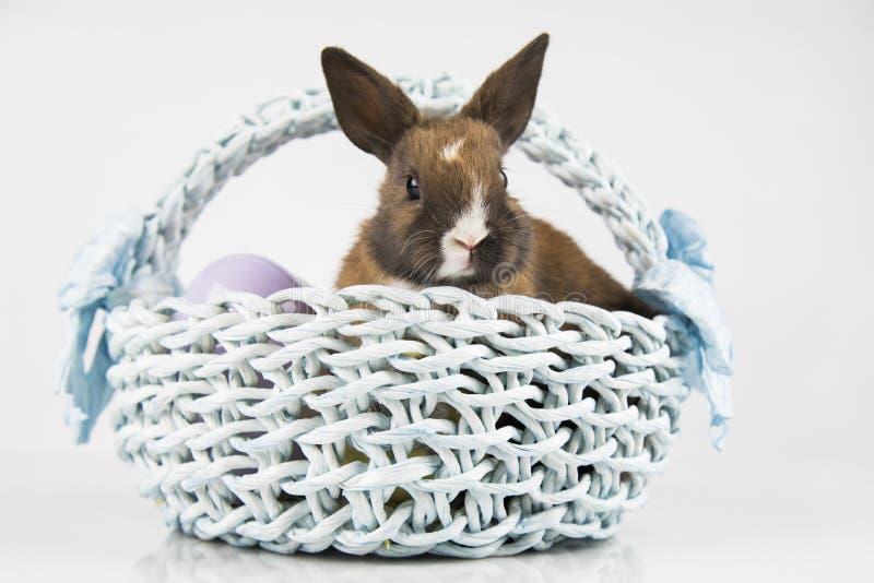 Nett wenig Kaninchen mit Korbhintergrund lizenzfreies stockbild