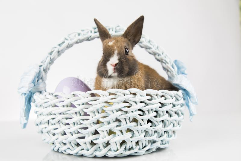 Nett wenig Kaninchen mit Korbhintergrund lizenzfreies stockfoto
