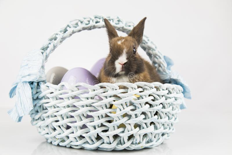 Nett wenig Kaninchen mit Korbhintergrund stockfotografie