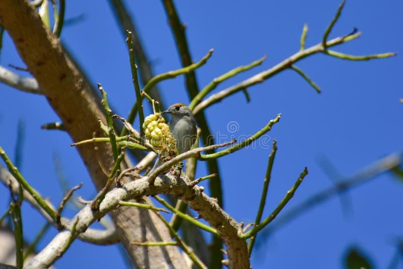 Nett wenig Spatz auf einem Baum stockbild