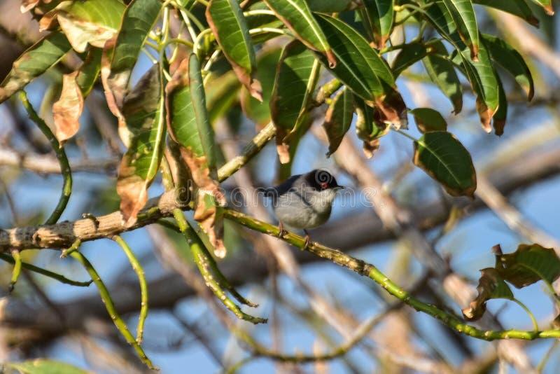 Nett wenig Spatz auf einem Baum lizenzfreies stockfoto
