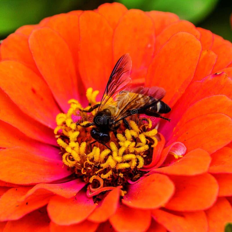Nettare dai fiori fotografia stock