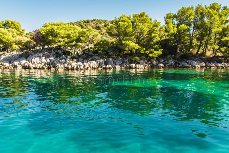 Nette Bäume auf dem Ufer im adriatischen Meer in Kroatien lizenzfreie stockfotos