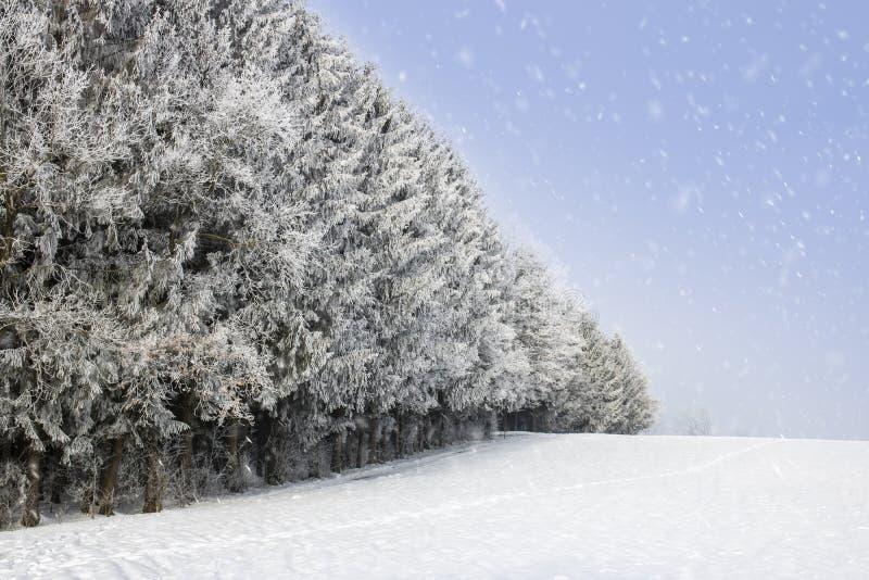 Nette Bäume stehen mit Schneeflocken gegossen stockfotografie