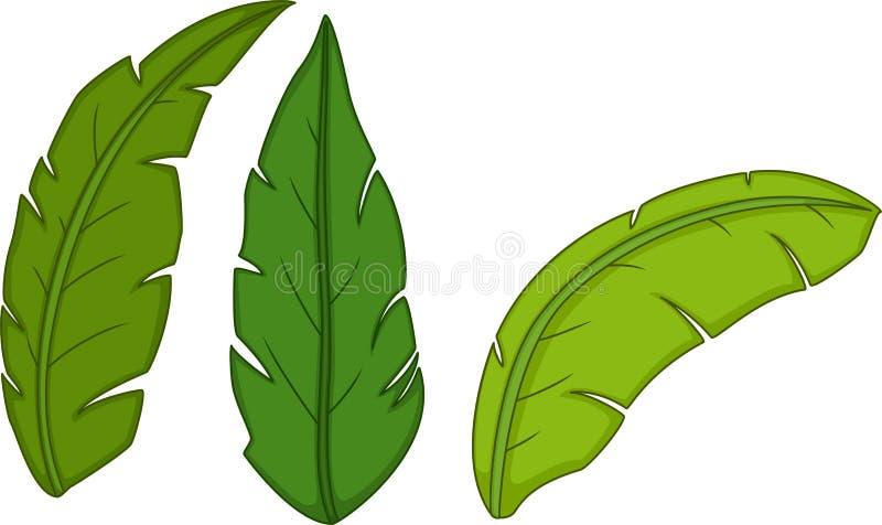 Nette Bananenblattkarikatur auf weißem Hintergrund vektor abbildung