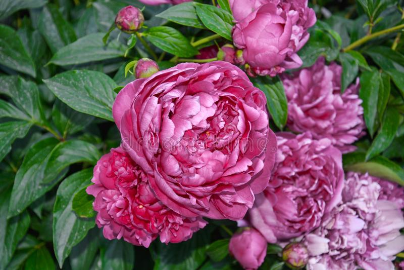 Nette Blume stockfotos