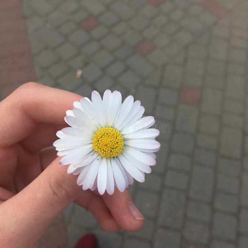Nette Blume stockbilder