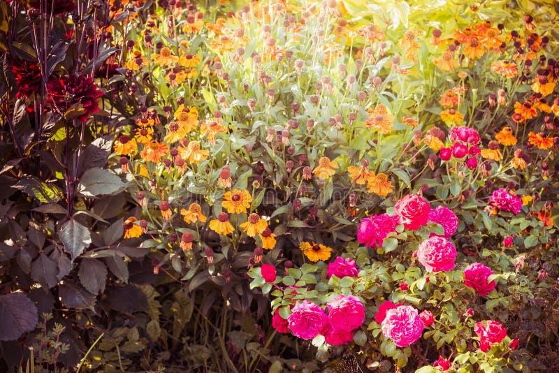 Nette Blumen im Garten oder in Park, im Freien stockfotos