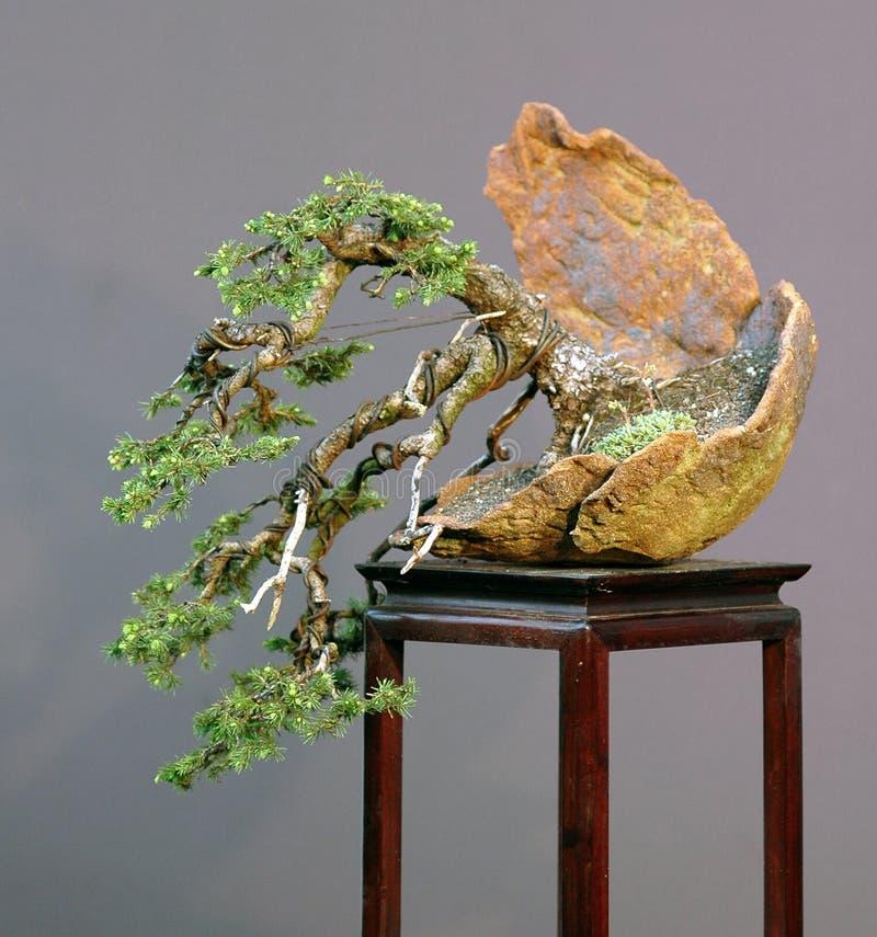 Nette bonsai stock fotografie