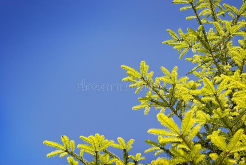 Nette boom, aardachtergrond stock foto's