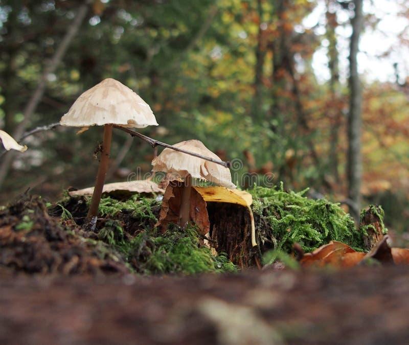 Nette dünne wilde Pilze in den Wald lizenzfreies stockfoto