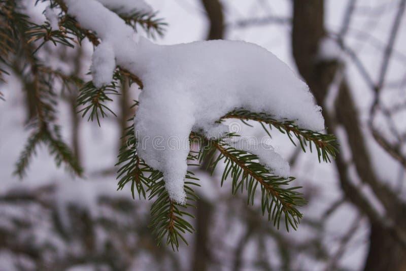 Nette die twijg met sneeuw wordt bestrooid royalty-vrije stock foto