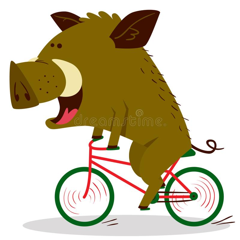 Nette Eber oder Warzenschweincharakter, der Fahrrad fährt Vektor illustr lizenzfreie abbildung