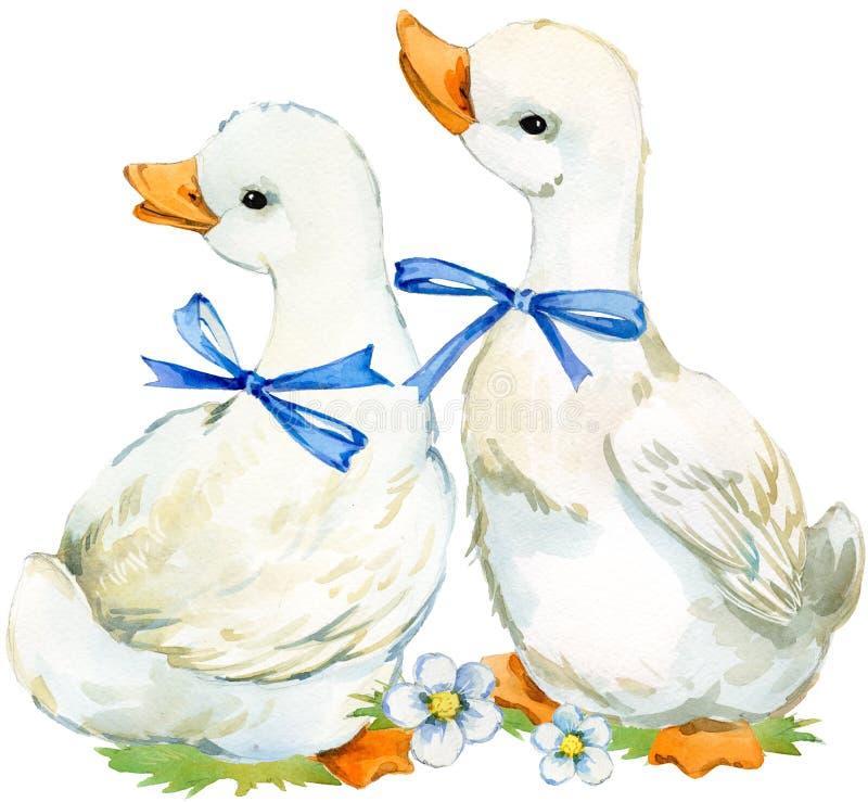 Nette Ente inländische Bauernhofvogel-Aquarellillustration lizenzfreie abbildung