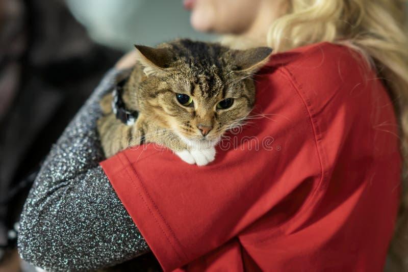 Nette erschrockene Katze in den Händen eines Mädchenfreiwilligen Konzept von Menschlichkeit, von G?te und von Freundschaft lizenzfreies stockfoto